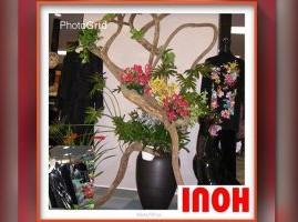 INOH(モリーブ)
